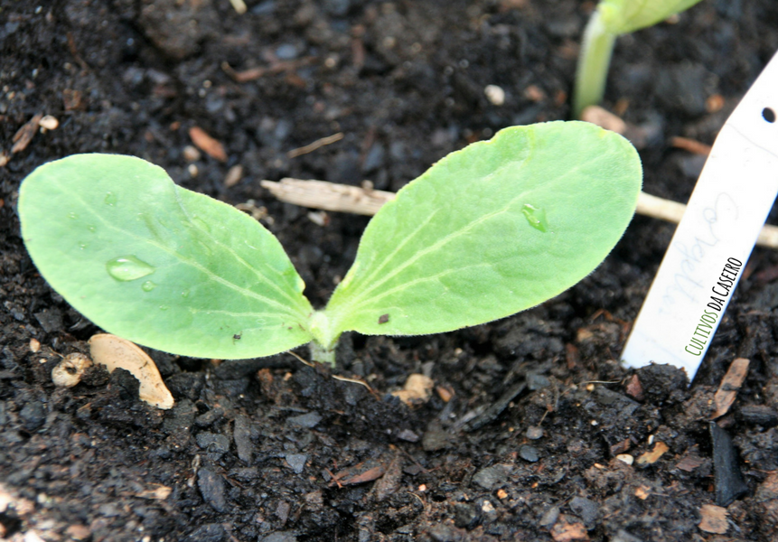 Plantar em Abril