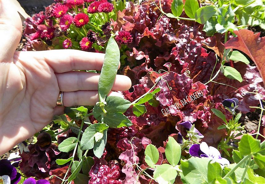 ervilhas-de-grão-alfaces-flores