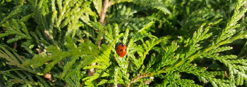 insectos-na-horta