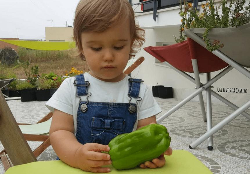 plantar-pimento-em-agosto