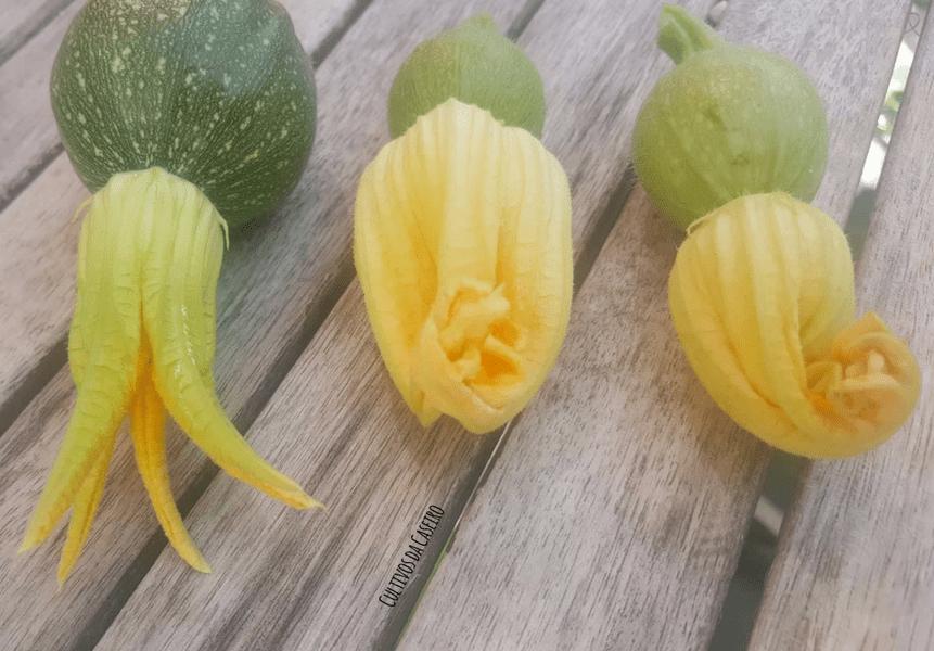 flor-de-curgete