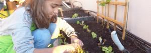 cultivar com crianças no inverno