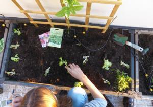 Top 5 de plantas para cultivar com crianças