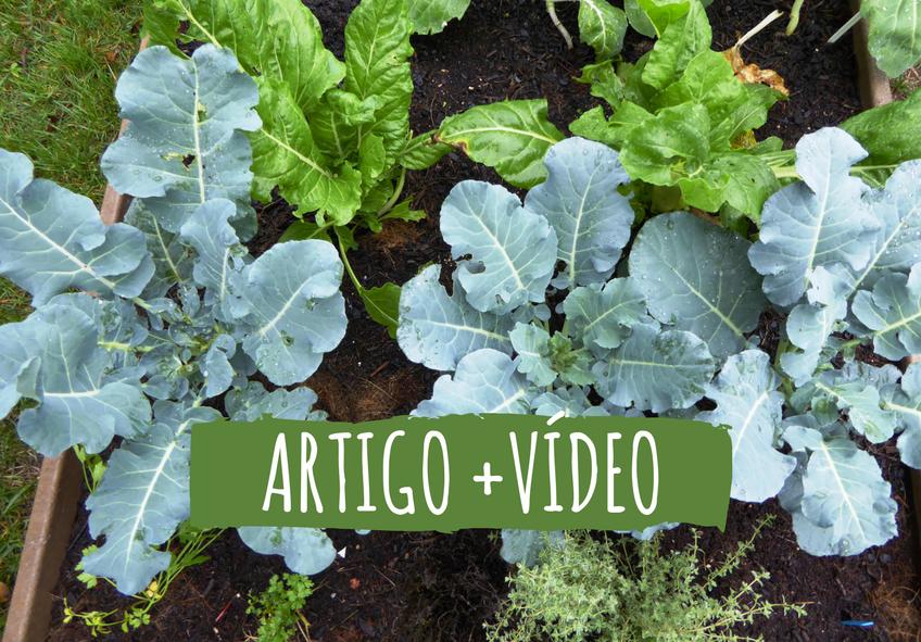 plantar e facil dificil e manter cultivos da caseiro