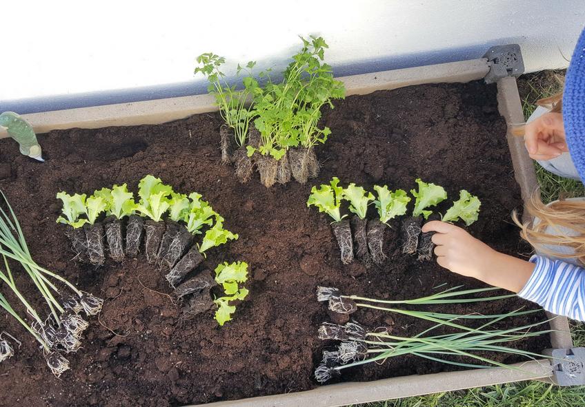 top 5 plantas para cultivar com crianças