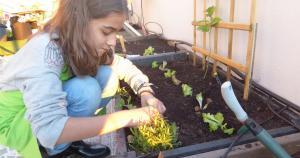 top cinco plantas para plantar com crianças