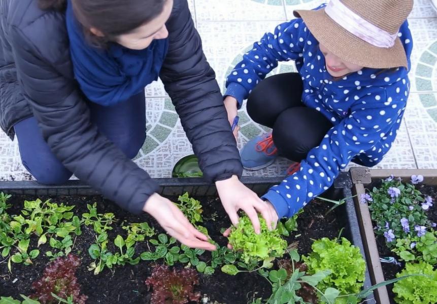 plantar uma horta em casa com crianças