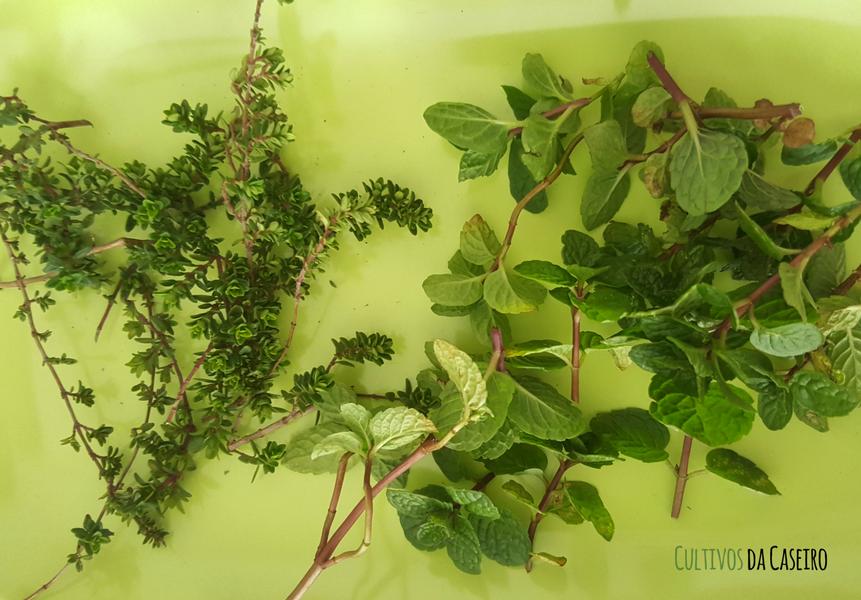 infusão-de-ervas-aromáticas