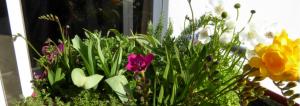 cultivar na varanda