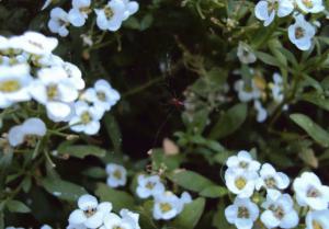 aranhas-amigas-da-horta