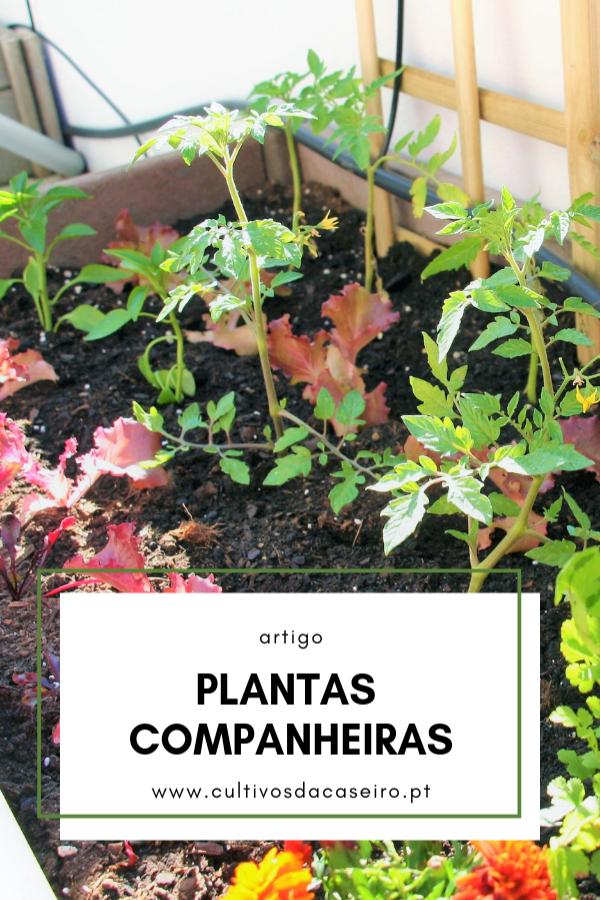plantas companheiras na horta