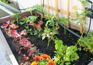 plantas companheiras
