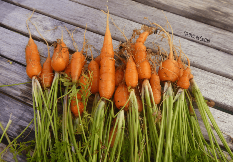 legumes da horta urbana