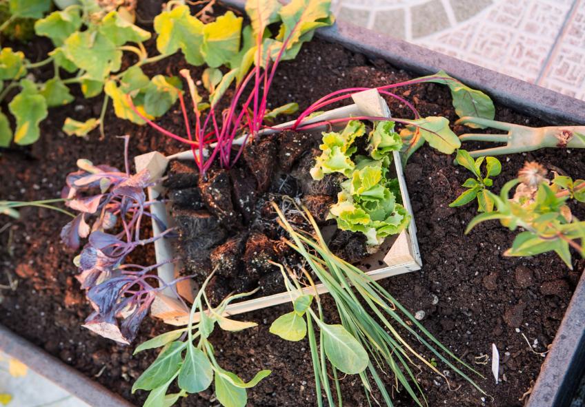 rotação-de-culturas-horta