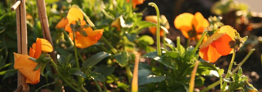 flores na horta