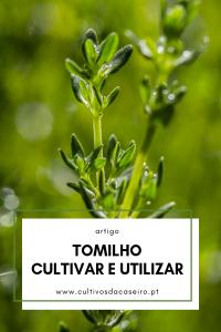 tomilho-aprendam-a-cultivar-e-utilizar-esta-erva-aromatica