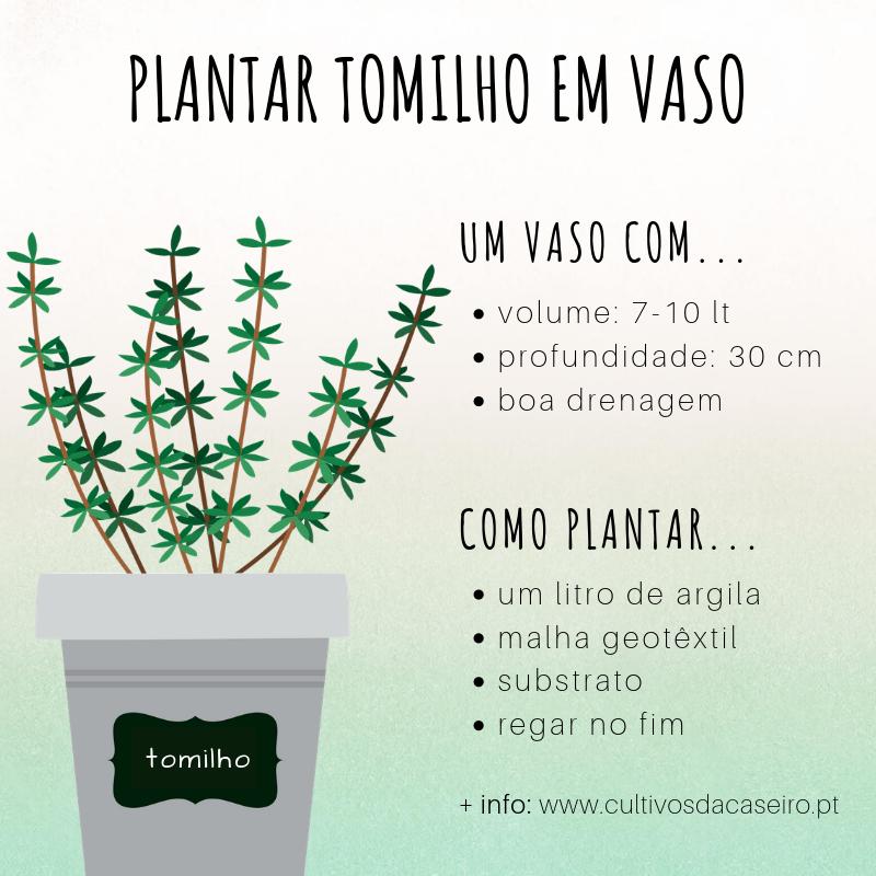 plantar-tomilho-em-vaso