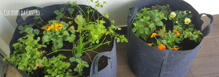 horta em vasos