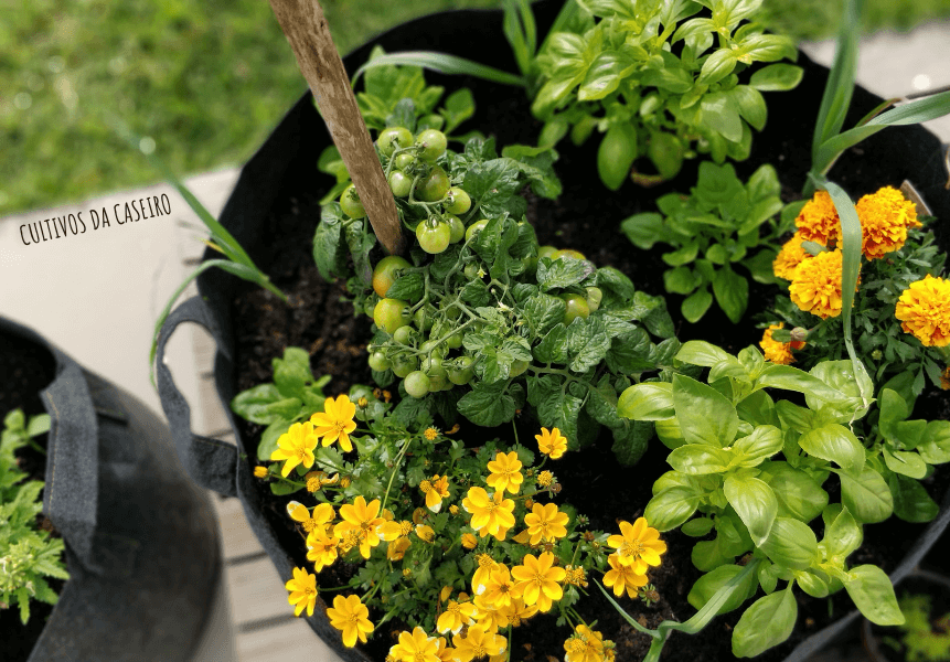 a-minha-horta