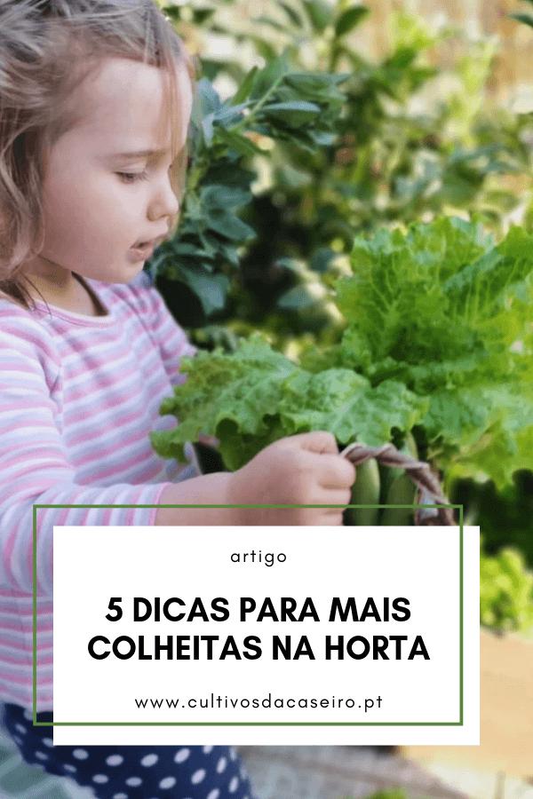 5-dicas-para-mais-colheitas-na-horta