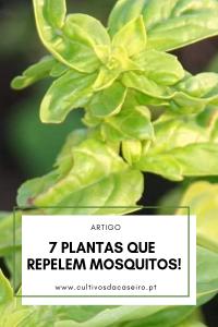 7 plantas que repelem mosquitos!