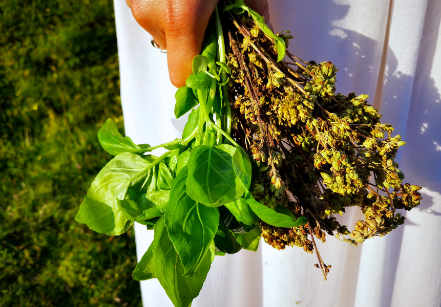 ervas aromáticas ayurveda