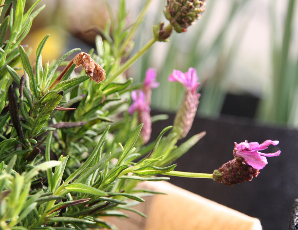 manual e ebook jardim de ervas aromáticas