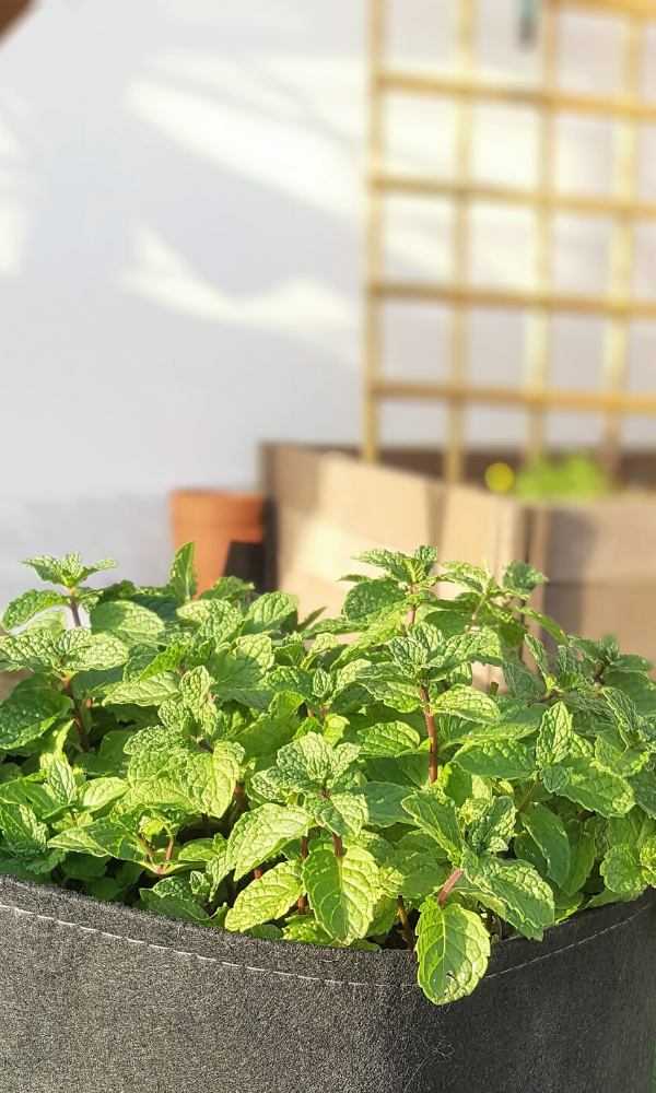 manuais e ebooks jardim de ervas aromáticas