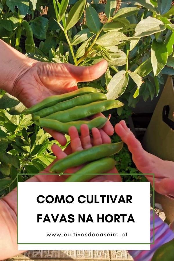 Como-cultivar-favas-na-horta-1
