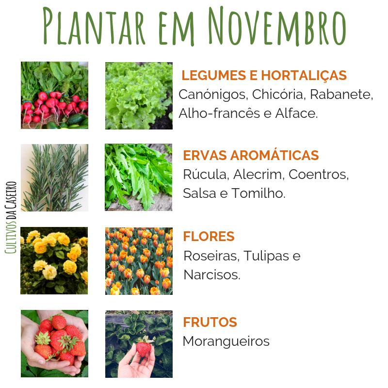 plantar em novembro