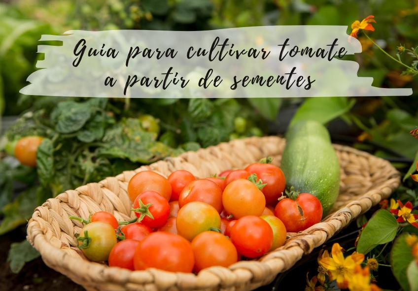 como cultivar tomate a partir de sementes