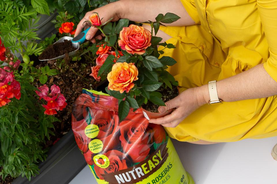 substratos para rosas